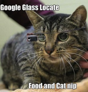 Cat wearing glass